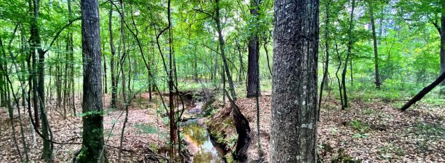 28 Acre Tract with Creek Frontage Bolingbroke Manor
