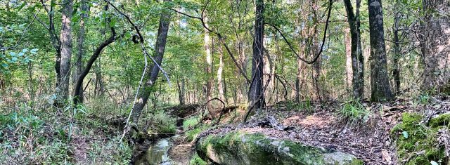 33 Acre Serene Wooded Tract with creek Bolingbroke Manor